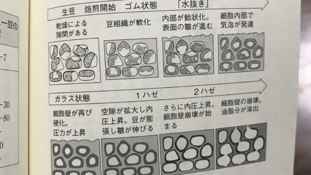焙煎時の豆の様子を示したイラスト